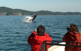 Tourists watching from boat as humpback whale breaches.