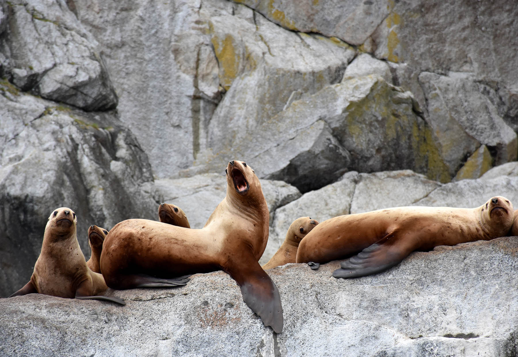 Sea lions lounging on rocks.